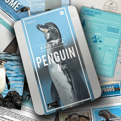 an image of an Adopt a Penguin gift idea