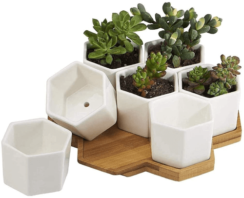 an image of mini ceramic plant pots with bamboo trays