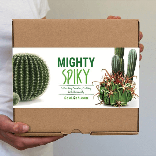 an image of a mighty spiky cactus gift set seed kit that will let you grow your own cactus