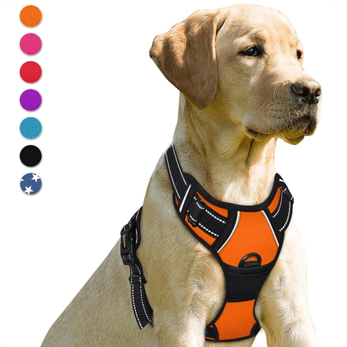 an image of a no pull dog harness